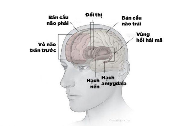 1/ Hoạt động của vùng hồi hải mã đóng vai trò then chốt với trí nhớ của con người 1